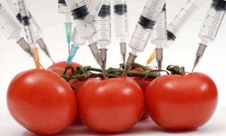 Δυνατότητα απαγόρευσης της καλλιέργειας μεταλλαγμένων οργανισμών