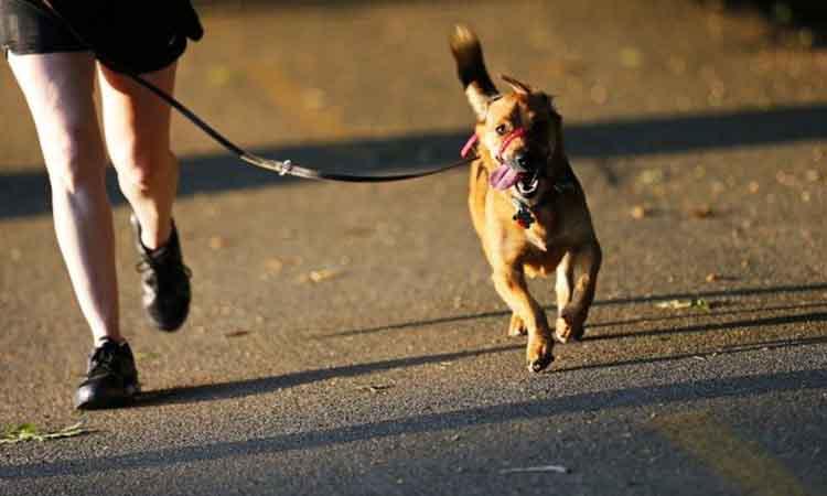 Δέκα χρόνια νεότεροι όσοι έχουν σκύλο