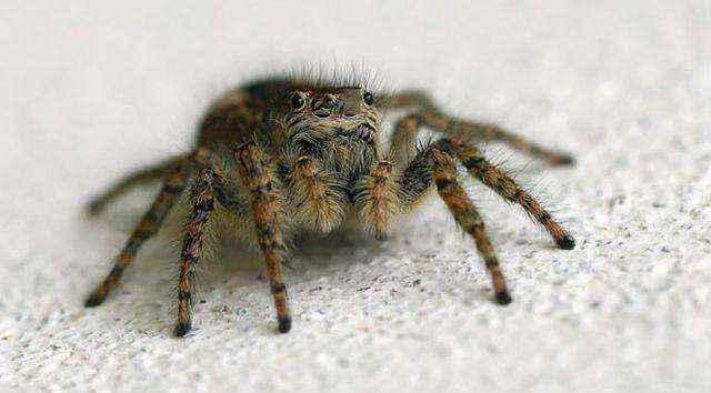 Πέθανε από τσίμπημα αράχνης