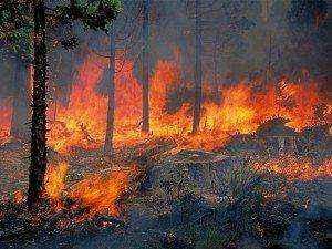 Στρέμματα πευκοδάσους κάηκαν στην Παλαιά Επίδαυρο