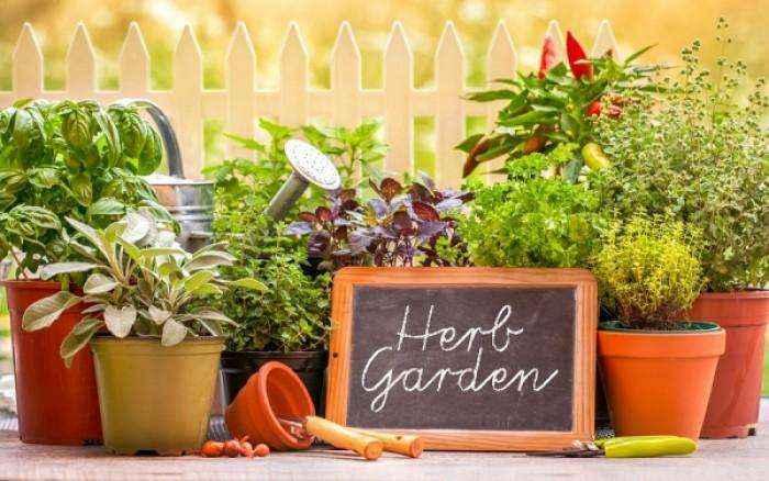 Τα 9 βότανα & μυρωδικά με μοναδικά οφέλη για την υγεία