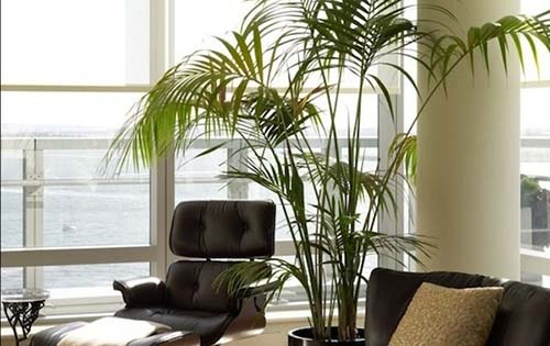 3 έξυπνοι τρόποι για να επιβιώσουν τα φυτά σας, όσο λείπετε διακοπές