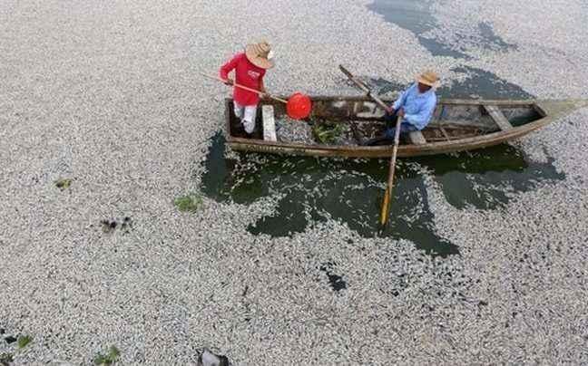 «Πλημμύρισε» με νεκρά ψάρια λίμνη του Μεξικό