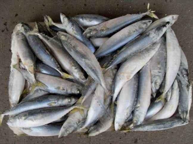 Η κατανάλωση ψαριών προστατεύει την ακοή