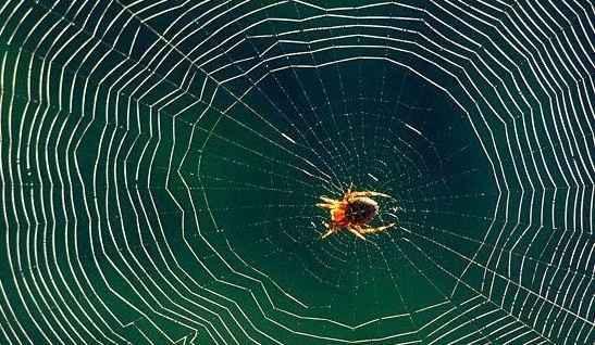 Μια εφαρμογή για όσους φοβούνται τις αράχνες