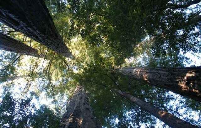 Το ηρεμιστικό της σύγχρονης εποχής είναι… τα δέντρα