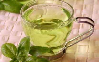 Το πράσινο τσάι στη μάχη κατά του καρκίνου