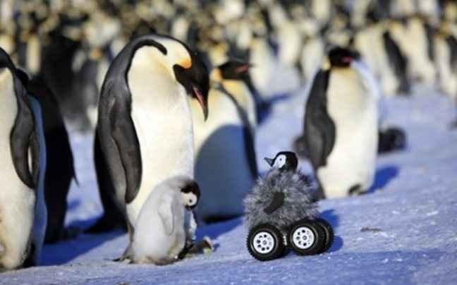 Ένας πιγκουίνος με... ροδάκια