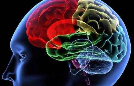 Οι γλώσσες αφήνουν το στίγμα τους στον εγκέφαλο