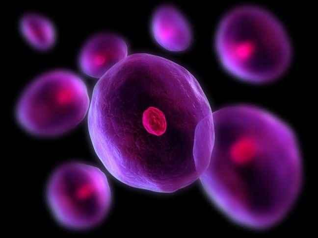 Η έκθεση στο κάδμιο γερνάει τα κύτταρα