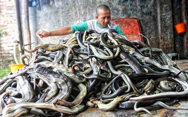 Πώς φτιάχνονται οι τσάντες από φίδια