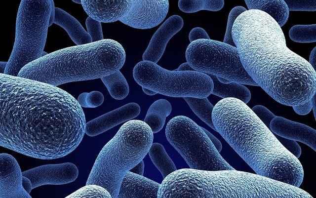 Αντικείμενα ομορφιάς γεμάτα… βακτήρια