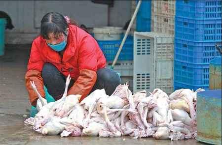 Δύο νεκροί στην Κίνα από τη γρίπη των πτηνών H7N9