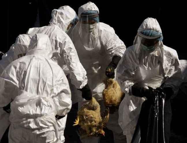 Κι άλλος θάνατος στην Αίγυπτο από τη γρίπη των πτηνών