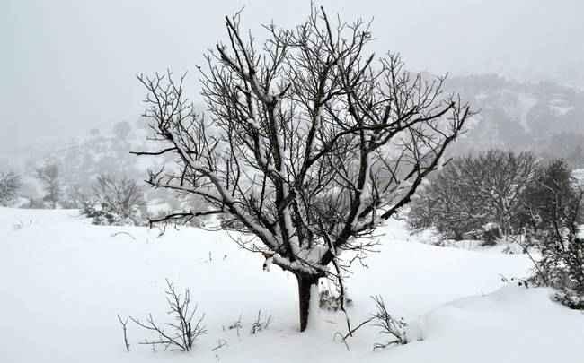 Νέα επέλαση του χιονιά – Θα χιονίσει στο κέντρο της Αθήνας