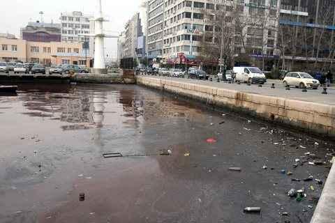 Νεκρά ψάρια στον Θερμαϊκό Κόλπο