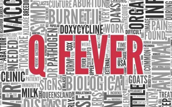 Πυρετός Q: Πώς μεταδίδεται και ποια είναι τα συμπτώματα