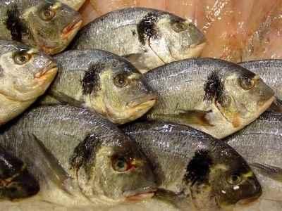 Για καλύτερη υγεία εντάξτε τα ψάρια στη διατροφή σας