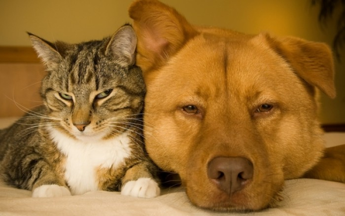 Ποιες ασθένειες μεταδίδουν τα ζώα στον άνθρωπο