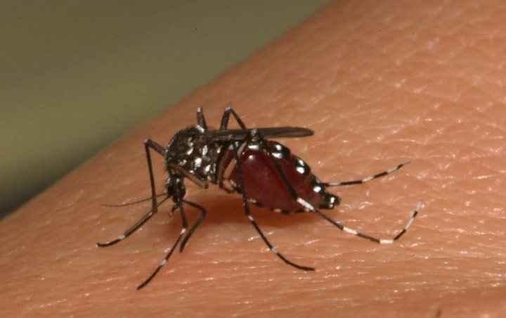 Τα κουνούπια... έλκονται από τα γονίδια