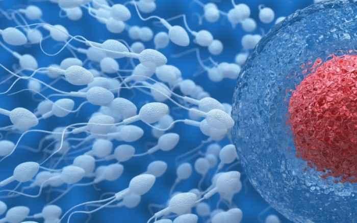 Ανδρική στειρότητα: Επιστήμονες έφτιαξαν για πρώτη φορά σπερματοζωάρια στο εργαστήριο