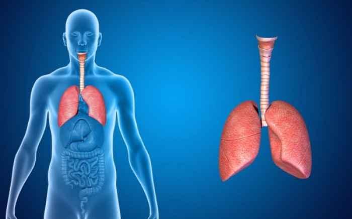 Πνευμονική Ίνωση: Ποιοι κινδυνεύουν περισσότερο από τη σοβαρή ασθένεια των πνευμόνων
