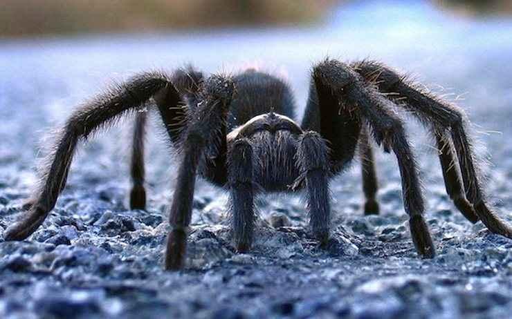 Τρώμε όντως... αράχνες στον ύπνο μας;