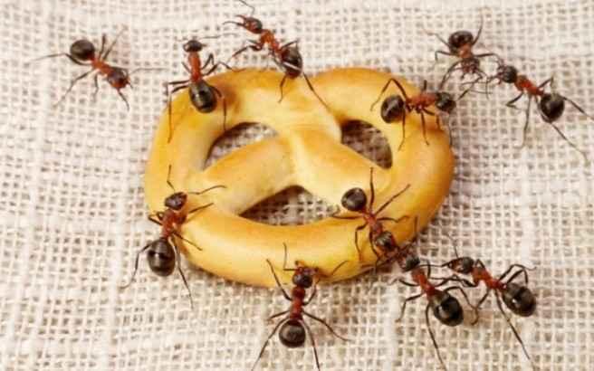 Πώς θα διώξετε τα μυρμήγκια