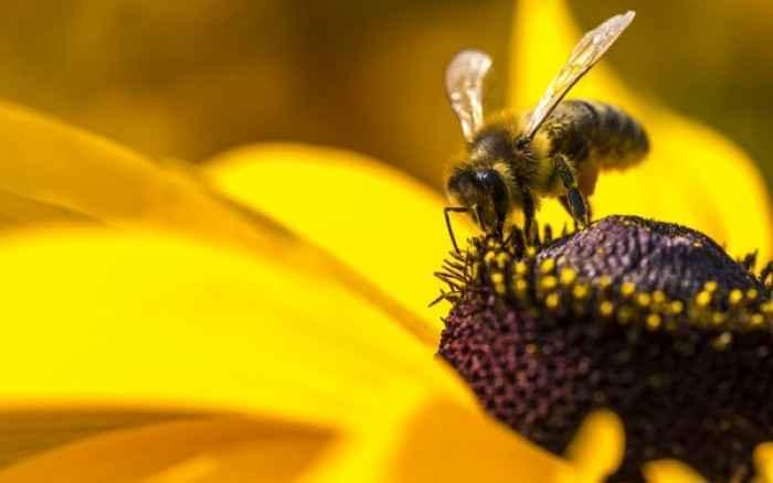 Τα πολύτιμα οφέλη της γύρης των λουλουδιών για τον άνθρωπο