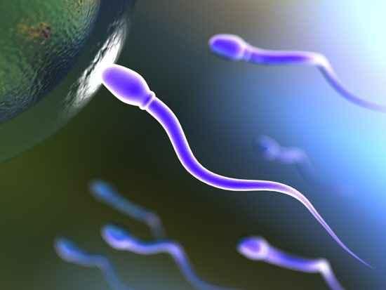 Τροφές που ενισχύουν το σπέρμα