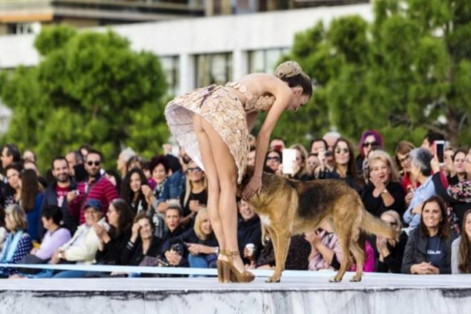 Αδιανόητο ατύχημα από κτηνίατρο της Θεσσαλονίκης! (photos)