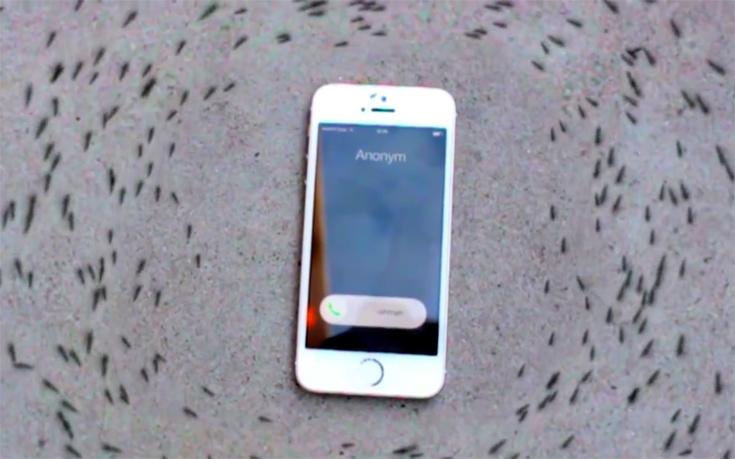 Μυρμήγκια κινούνται σε κύκλο κάθε φορά που χτυπά ένα iphone