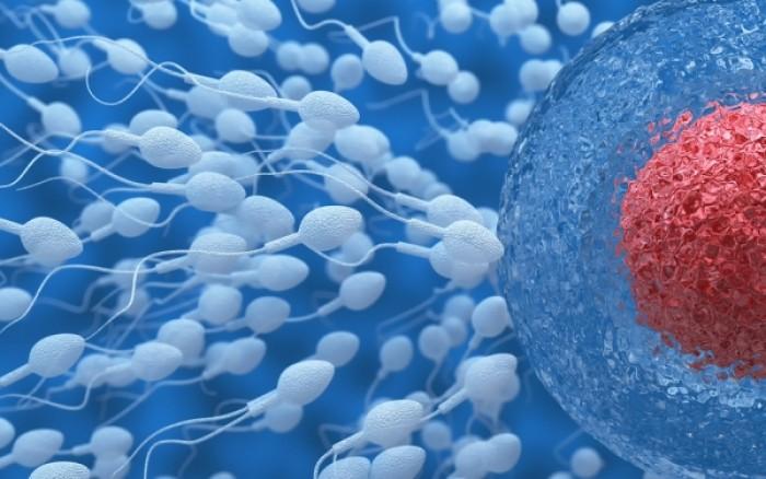 Σεξ και αλλαγές στο ανοσοποιητικό: Πώς επιδρούν στη γονιμότητα