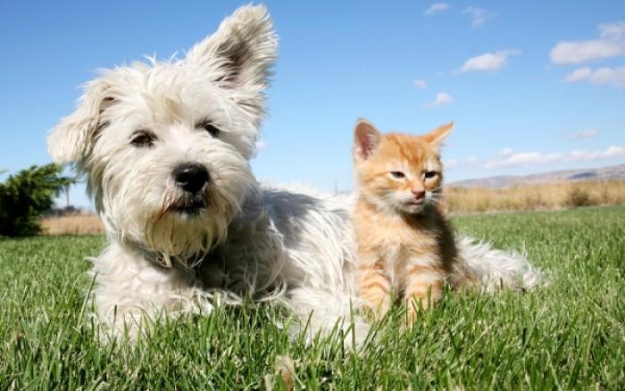 Δάγκωμα από σκύλο & γάτα: Τι πρέπει να κάνετε για να είστε ασφαλείς