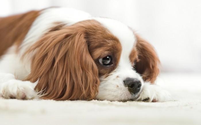 Κοινή ουσία στις τσίχλες μπορεί να σκοτώσει το σκύλο σας