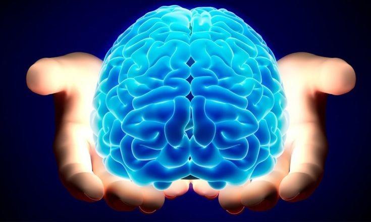 Ανακαλύφθηκαν δύο γονιδιακά δίκτυα νοημοσύνης στον εγκέφαλο