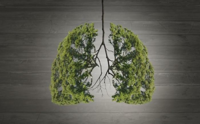 Το λαχανικό που «αγαπάει» τα πνευμόνια σας