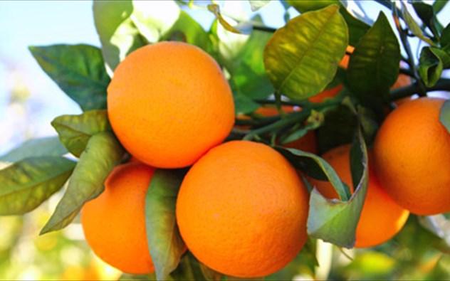 Δες τι μπορεί να κάνει το πορτοκάλι για το δέρμα!