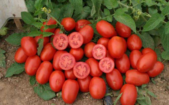 Μάσκα προσώπου με… ντομάτα κατά της ακμής