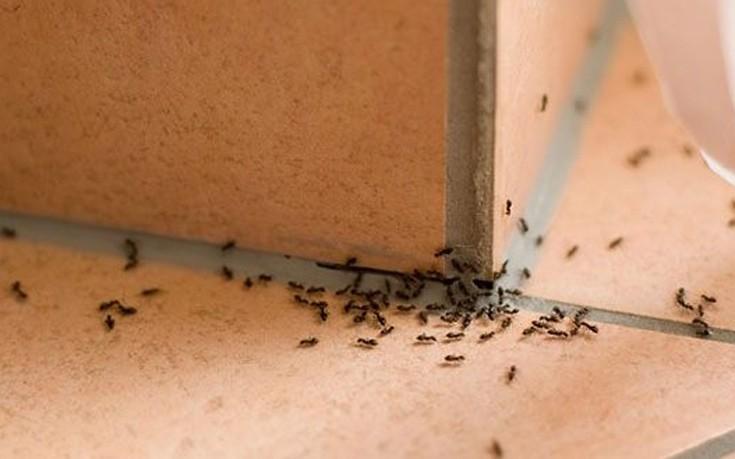 Πέντε φυσικοί τρόποι για να ξεφορτωθείτε τα μυρμήγκια από το σπίτι