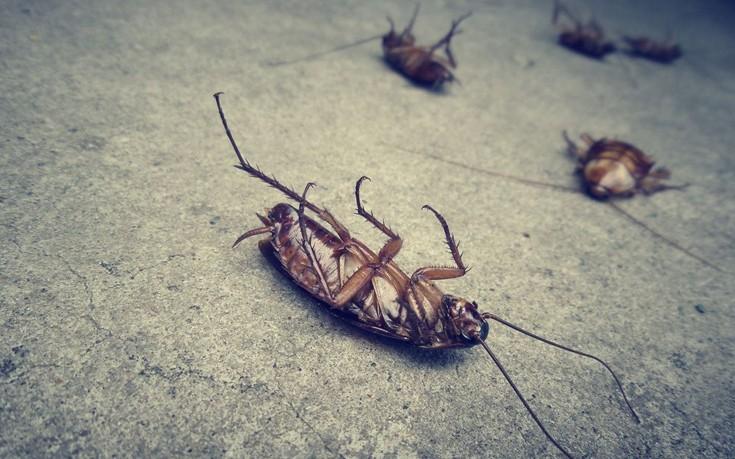 Πώς θα απαλλαγείτε από τις κατσαρίδες