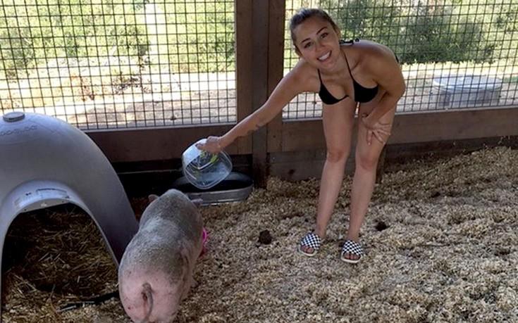 Η Miley Cyrus ταΐζει το γουρούνι της με το μπικίνι