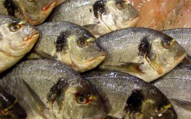 Τα ψάρια κάνουν καλό στην καρδιά μετά το έμφραγμα