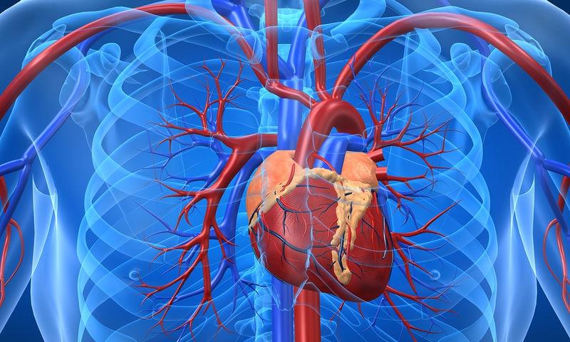 Τεστ Υπολογίστε την ηλικία της καρδιάς σας
