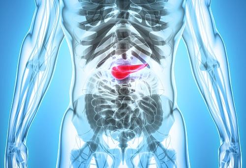 bigstock D Illustration Of Pancreas 182941813
