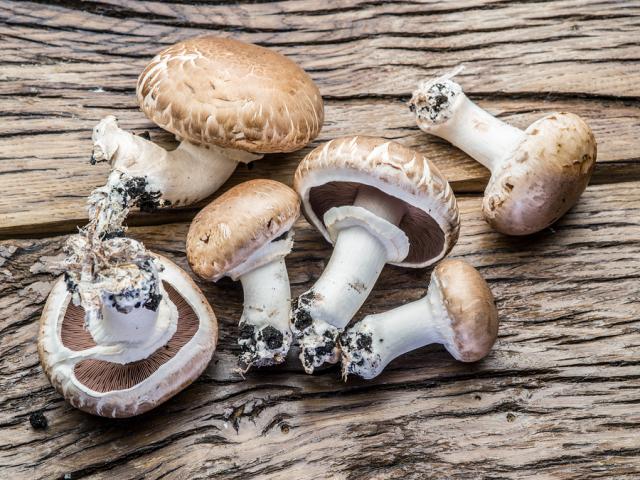 bigstock Champignon mushrooms on the wo 173671355