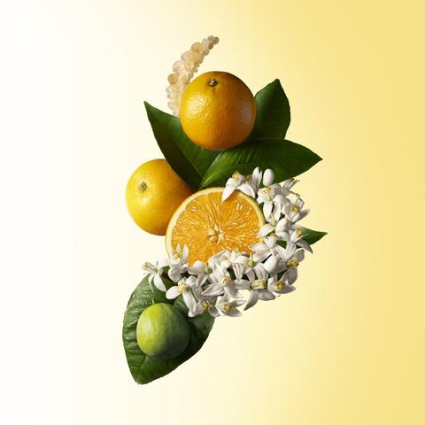 Molton Brown Orange Bergamot EDT Botanical KEJ009 XL