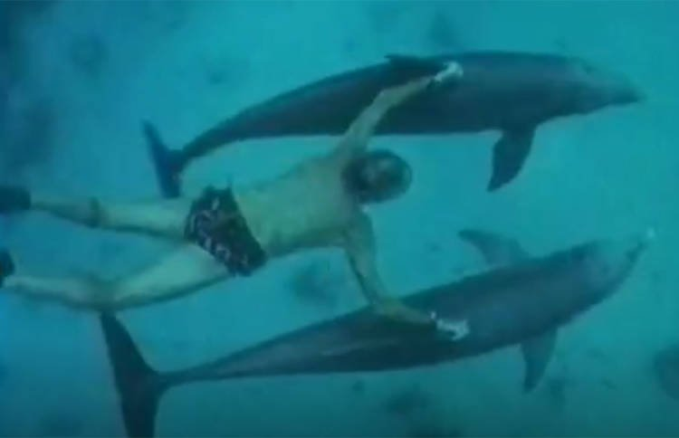 delfinia5