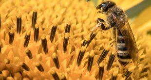 Είχε στο μάτι της τέσσερις μέλισσες που τρέφονταν με τα δάκρυά της