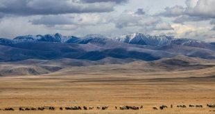 Συναγερμός στη Μογγολία μετά από δύο θανάτους από βουβωνική πανώλη